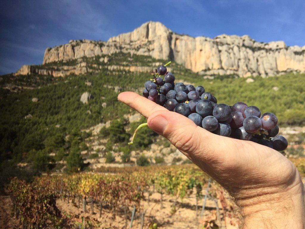Среди виноградников Каталонии: от одной винодельни к другой